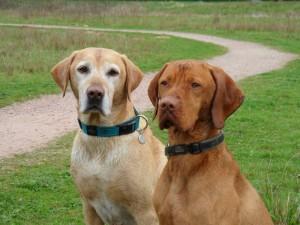 twee honden zitten naast elkaar