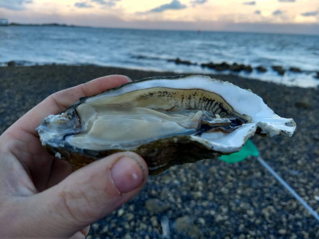 Geopende oester. Een online marketing opleiding zorgt dat je tot de kern komt